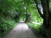 Self-catering Arran - The avenue leading to Kilmichael